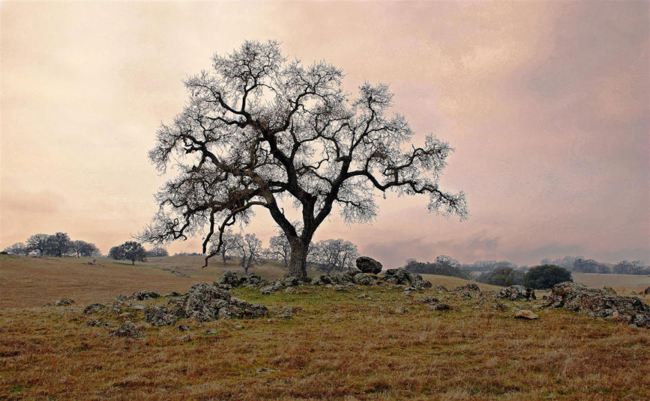Lodi Community Art Center now featuring its first-ever local photography show
