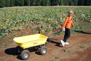 Pick produce, eat treats and shop at Apple Hill