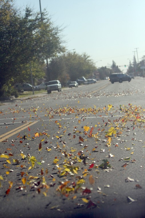 Windy days are chasing the fog away — and blowing down trees — in Lodi