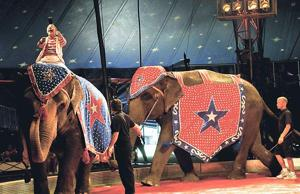 PETA still wants Lodi to place restrictions on circuses