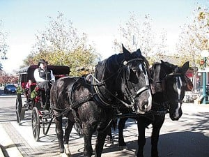 Thank you to our carriage ride sponsors