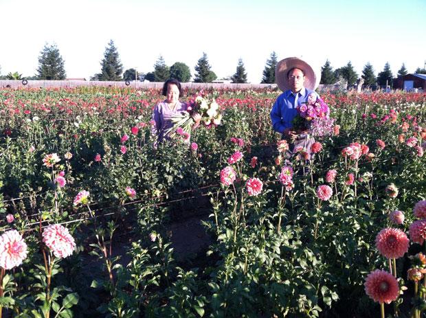 KC Flowers brightens Downtown Lodi Farmers Market