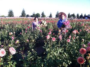 KC Flowers brightens Downtown Lodi Farmers Market