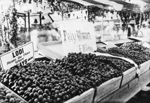 Lodi's first grape harvest celebration was held in 1907