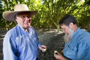 Walnut orchard in Lockeford protected from development