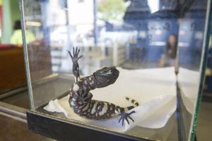 World of Wonders Science Museum hosts Reptile Roundup