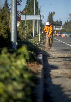 City of Lodi removes trees along Lower Sacramento Road