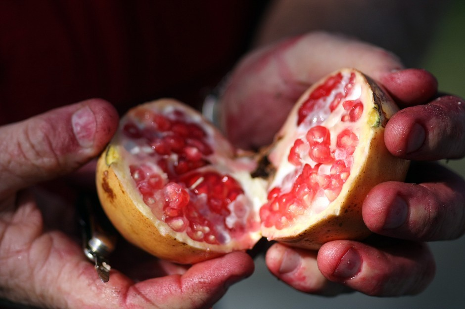 Passionate for pomegranates