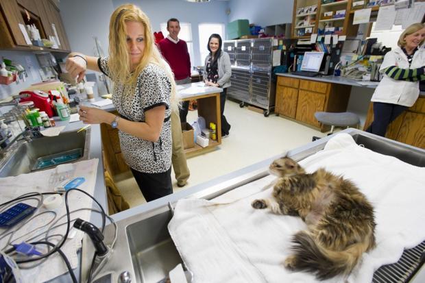 Oakwood Veterinary Hospital in Woodbridge to open for urgent care hours