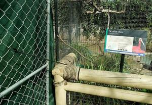 An ugly sight — construction fences among Micke Grove Zoo animals