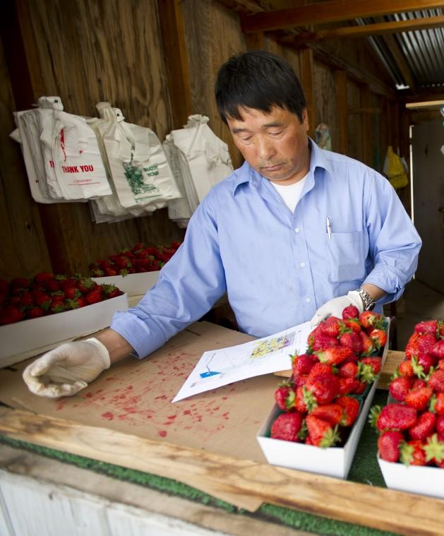 Lodi City Council approves annexing 30 acres — currently strawberry fields — for new office building development