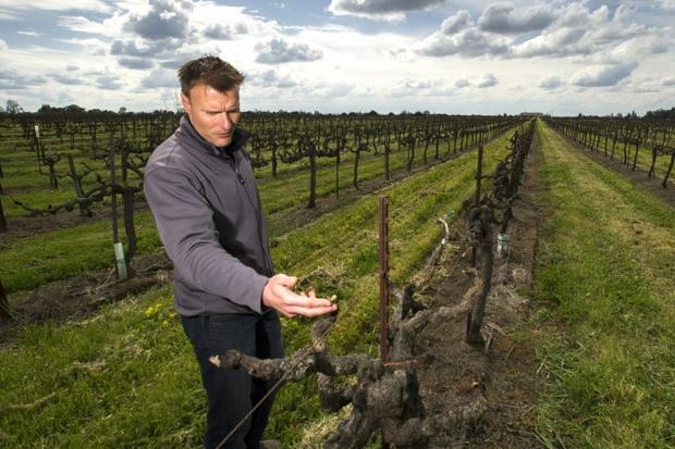 Some vintners grow sustainable grapes for a bigger payout thanks to Lodi Rules