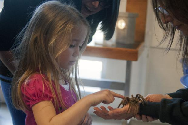 Furry spiders, hissing beetles take over the World of Wonders Science Museum