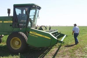Alfalfa harvest helps feed local dairy