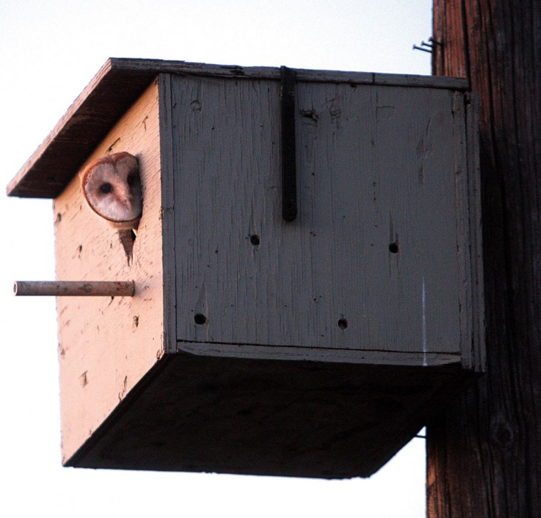 Wine commission, utility team up to save owls from getting zapped