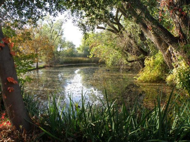 Impressionist Garden - Lodi Lake