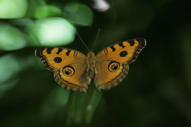 Commune with butterflies and blooms at the Conservatory of Flowers