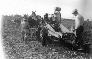 Harvesting the bounty: Historic images of Lodi agriculture