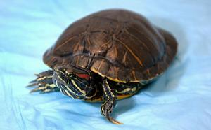 Not wanted: Invasive species run rampant locally