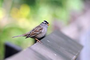Audubon Society calls on citizen scientists to join the Great Backyard Bird Count