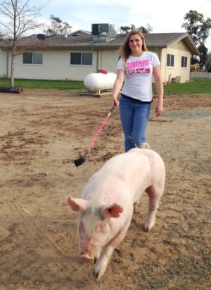 Galt girl dismayed by beating, theft of pigs