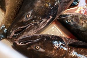 Delta fish numbers continue to languish