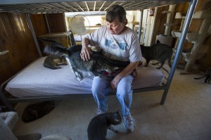 Galt cat shelter seeks donations to keep doors open