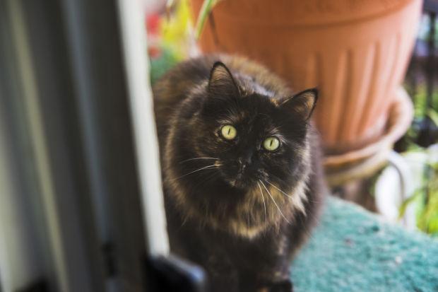 Galt Mayor Marylou Powers works to spay, neuter city's stray animals