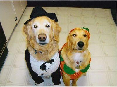 Sammy and Scout can't wait for Halloween!