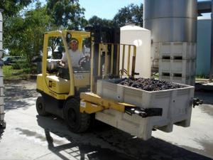 Getting ready to press Cinsault at Jessie's Grove