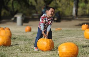 As much-needed rain falls in Lodi, stay safe while trick-or-treating