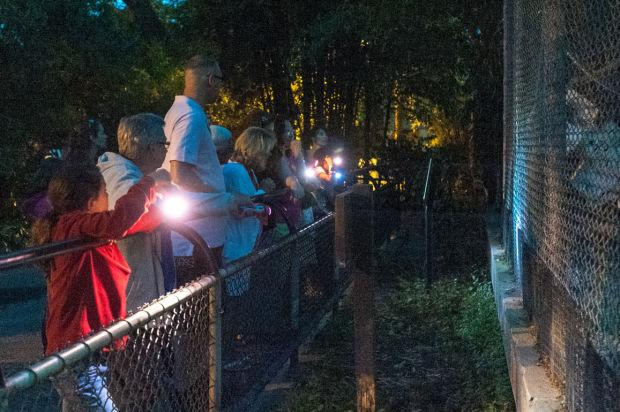 Micke Grove Zoo hosts Zoo After Dark