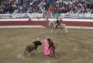 Melee at bullfight renews animal cruelty debate