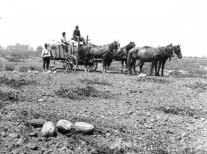 Watermelons were once Lodi's top crop