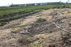 Local farmers fear dry weather could take toll on crops