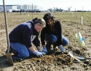 Students restore natural beauty at LangeTwins Winery