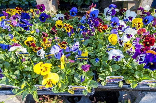Plant a winter garden