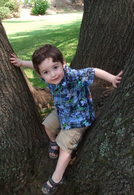 Grandson Up a Tree