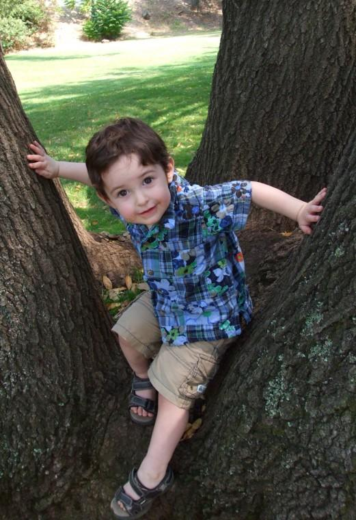 Grandson Up a Tree