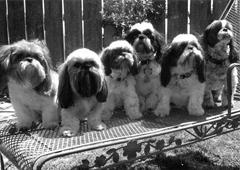 weigumdogs.jpg