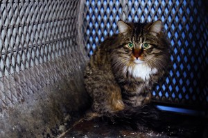 Feral cats find new lives and homes as pest control experts