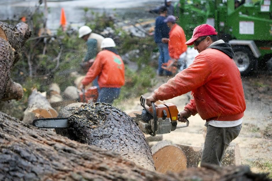 70-foot tree topples, taking down light post