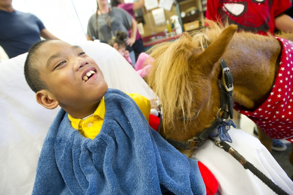 Mini horses bring big smiles to local kids