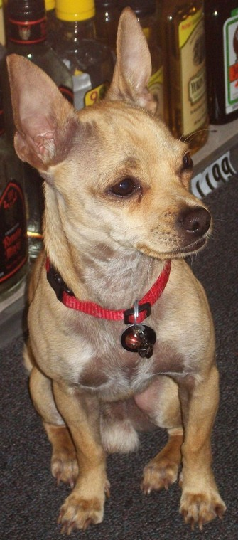 Lodi store's lovable mascot, Champ, vanishes — owners offering a reward for return