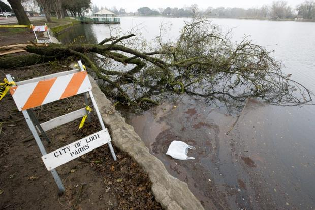 High winds, fallen trees temporarily close Lodi Lake