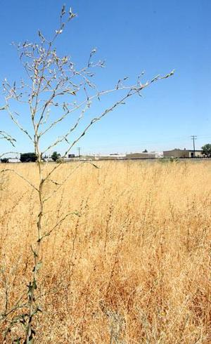 Cutting weeds to cut risk