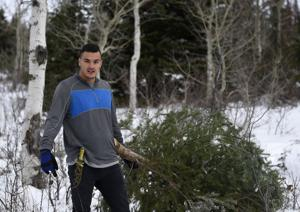 Gallery: Tree Cutting Permits