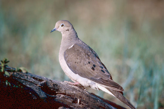 Upland Game Bird Hunting - wildlife.ca.gov