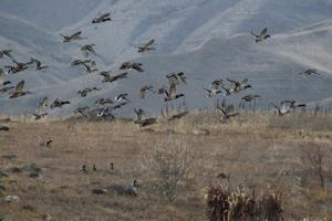Gallery: Birds of Southern Idaho
