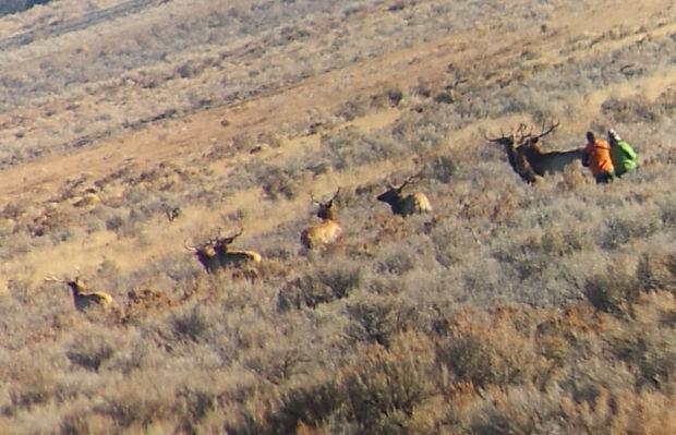 Gallery Idaho Hunters Big Game